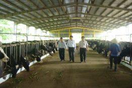 Nâng cao kỹ thuật sinh sản trong chăn nuôi bò sữa, bò thịt