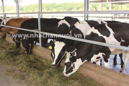 USE OF PROGESTERONE IN BOVINE REPRODUCTIVE MANAGEMENT